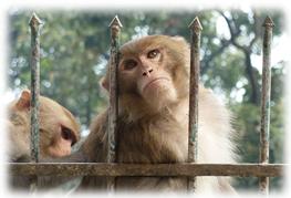 2 Affen